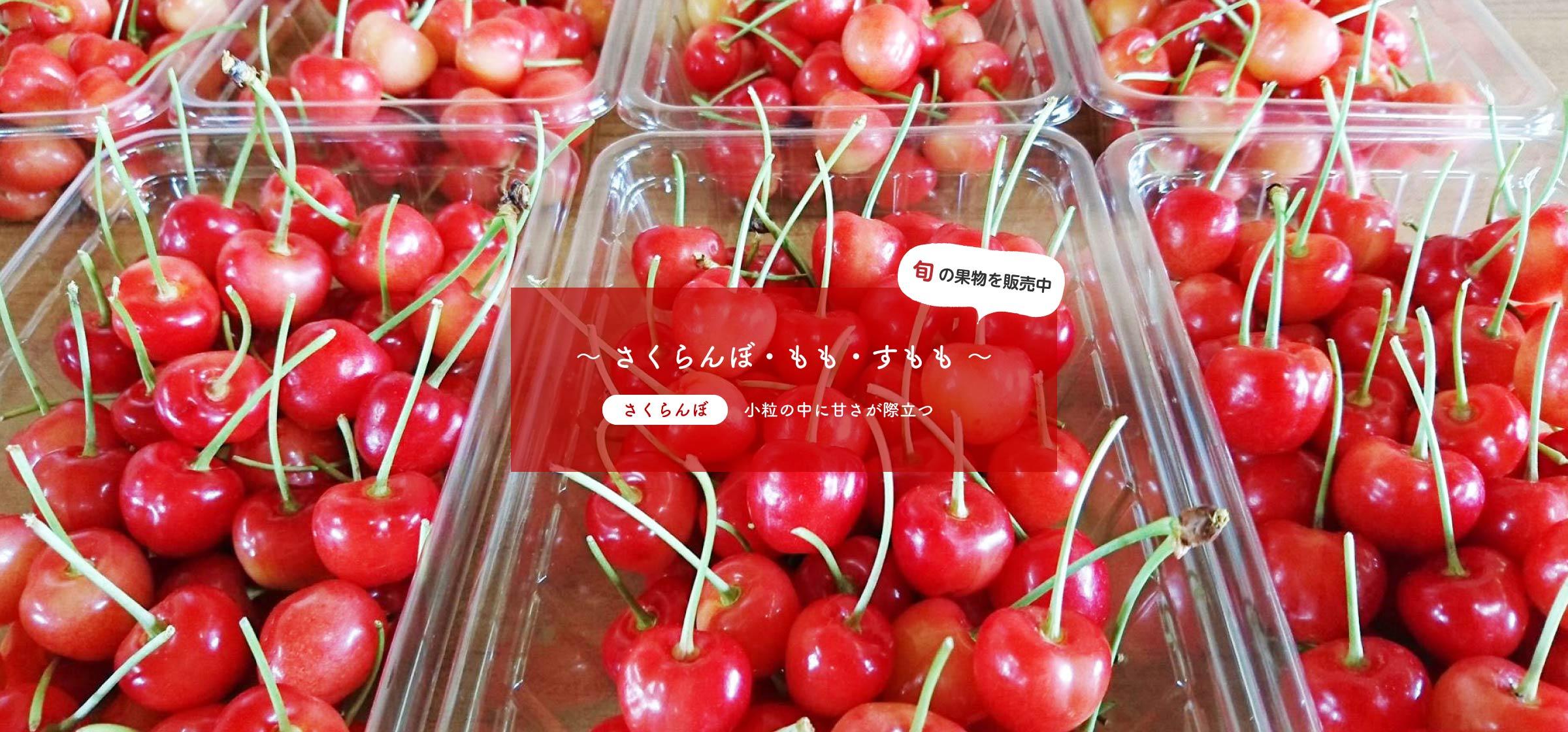 旬の果物を販売中~ さくらんぼ、もも、すもも ~さくらんぼ:小粒の中に甘さが際立つ