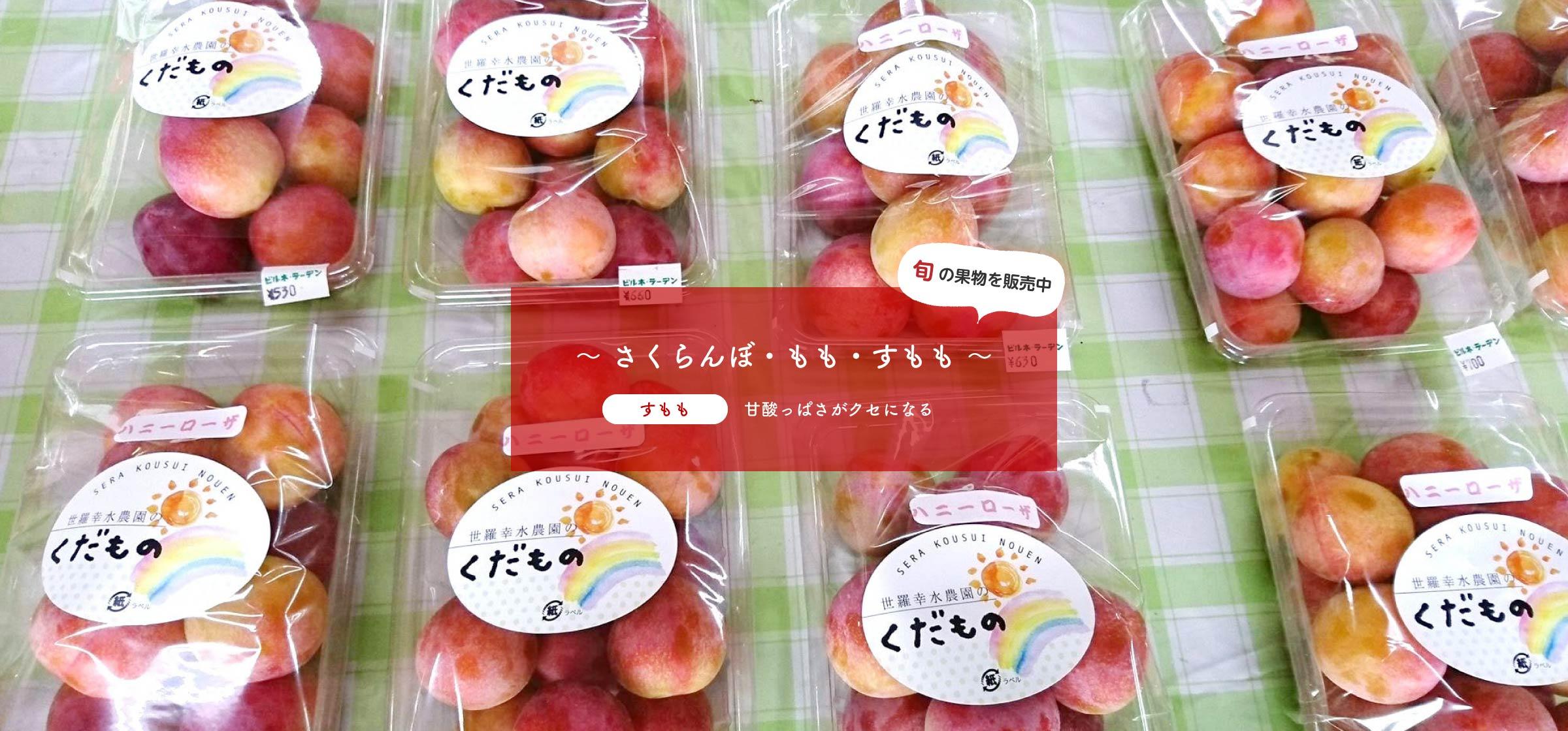 旬の果物を販売中~ さくらんぼ、もも、すもも ~すもも:甘酸っぱさがクセになる