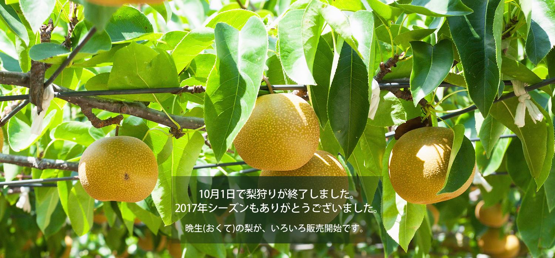 8月11日から梨狩りが開始です。