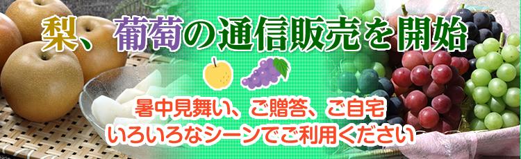 梨、葡萄の通信販売を開始