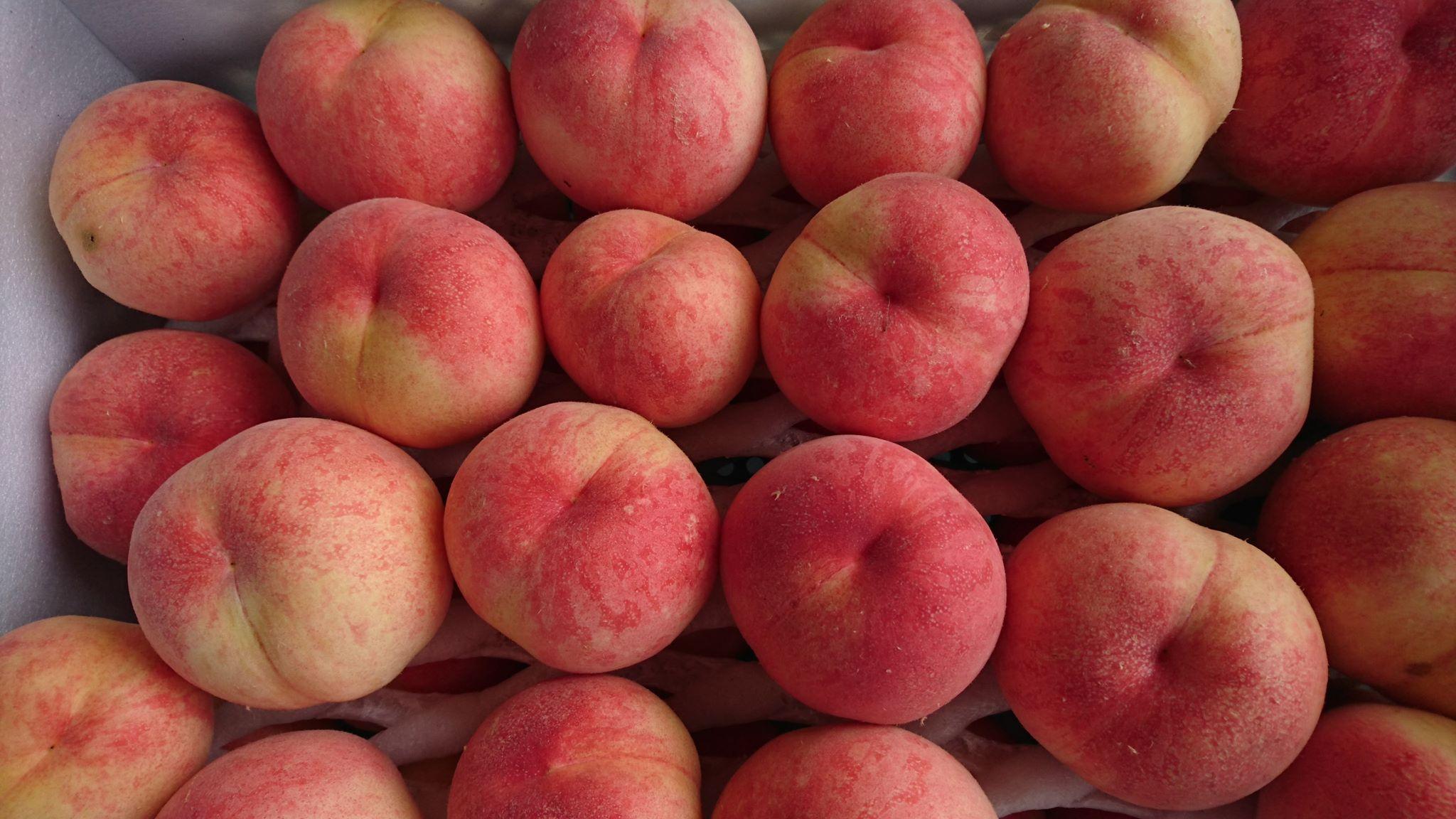 世羅幸水農園 桃の販売 加納岩白桃・みさか白鳳 3