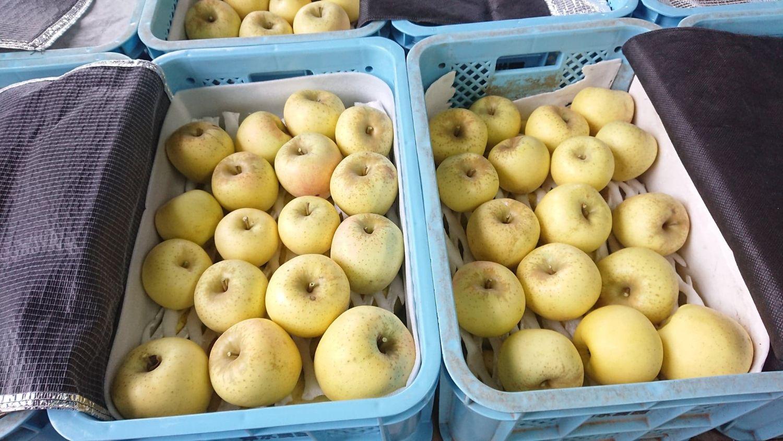 世羅幸水農園 りんご 2020.10 ビルネ・ラーデンで販売中 3